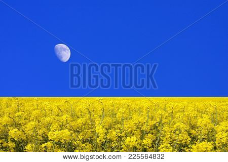 Yellow Rape Fields In The Farmland. Blue Sky And The Moon In The Background.