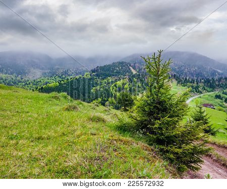 Springtime In Carpathian Mountains. Beautiful Scenery On A Rainy Day With Overcast Sky. Country Road