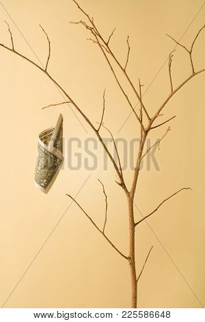 Conceptual Image Of A Dry Money Tree With Only One Bill Left