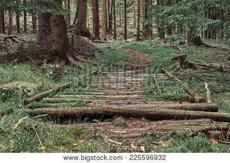 Nature Pine Forest With Trail Wooden Road. Scandinavian Forest In Evening Light. Nordic Tree Forest
