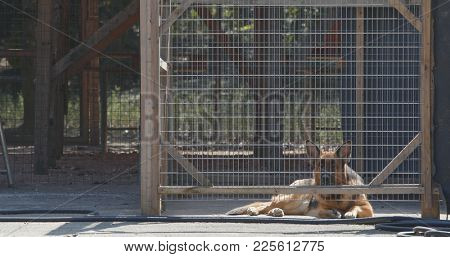 Guard dog inside the gate
