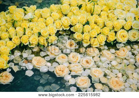 Roses With Yellow Buds In Water. Spa Composition With Flower Petals. Aroma, Aromatherapy, Therapy, T