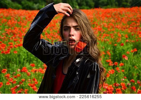 Beauty, Summer, Spring, Poppy Field. Opium Poppy, Botanical Plant, Ecology, Woman. Drug And Love Int