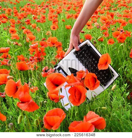 Drug, Narcotics, Opium, Novel. Journalism And Writing, Summer. Poppy, New Technology, Remembrance Da