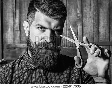 Bearded Man Hipster Barber With Beard And Moustache In Shirt Holds Sharp Scissors And Cut Hair In Ha
