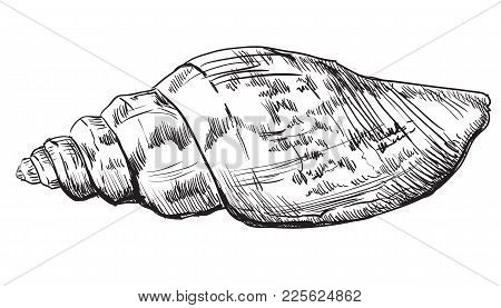 Hand Drawing Seashell. Vector Monochrome Illustration Of Seashell (conch Shell) Isolated On White Ba