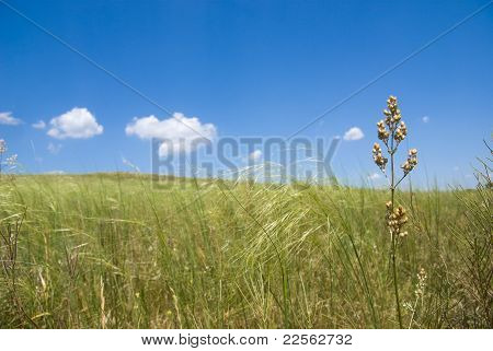 In The Steppe