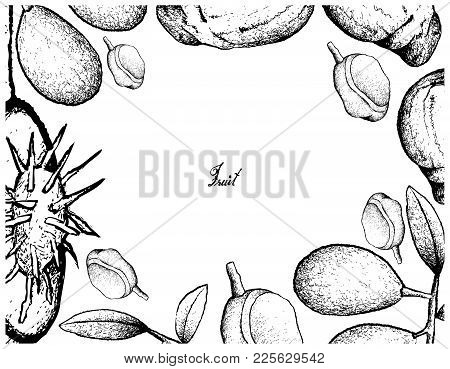 Tropical Fruit, Illustration Frame Of Hand Drawn Sketch Of Fresh Ambarella And Red Mombin Fruits Iso