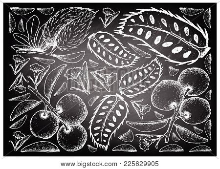 Fresh Fruits, Illustration Background Of Hand Drawn Sketch Fresh Tallow Plum Or Ximenia Americana An