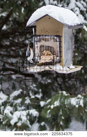 An Upside Down Nuthatch On This Bird Feeder Makes An Interesting Winter Scene.
