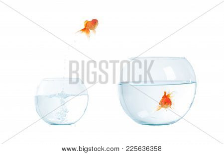 Gold Fish Jumping Out Of The Aquarium.