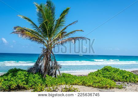 Lone Palm Tree On The Beach In The Caribbean.