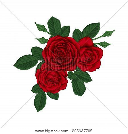 Beautiful Bouquet With Red Roses And Leaves. Floral Arrangement. Design Greeting Card And Invitation