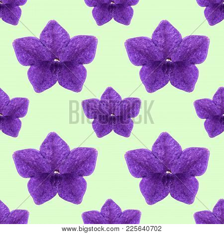 Fragrant Tobacco. Texture Of Flowers. Seamless Pattern For Continuous Replicate. Floral Background,