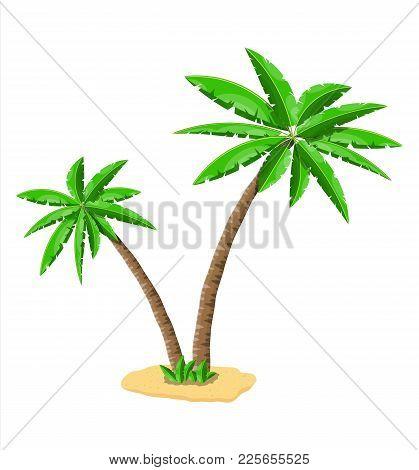 Tropical Green Palm. Jungle Leaves. Coconut Palm, Monstera, Fan Palm, Rhapis. Natural Leaf, Exotic B