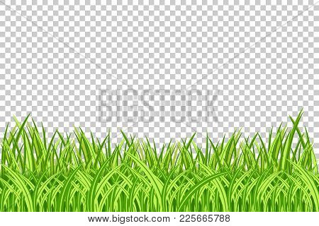 Grass Border. Vector Illustration. Realistic Isolated Green Grass Borders On The Transparent Backgro