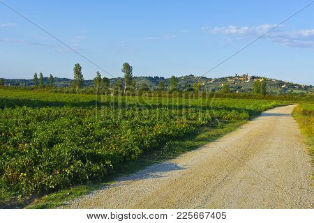Tuscany Landscape With Dirty Road Leading To The Medieval City. Road Between The Plantation Of Tomat