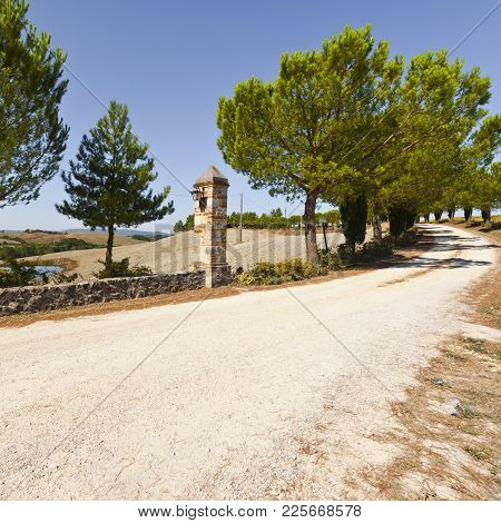 Driveway To The Italian Manor House Between Stubble Fields On The Hills Of Tuscany. Tuscany Landscap