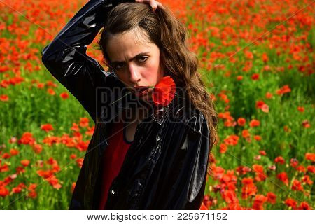 Opium Poppy, Botanical Plant, Ecology, Woman. Beauty, Summer, Spring, Poppy Field. Drug And Love Int