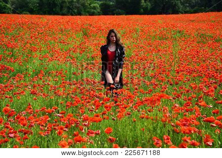 Poppy, Remembrance Day, Anzac Day. Opium Poppy, Botanical Plant, Ecology, Woman. Drug And Love Intox