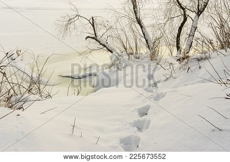 Winter Landscape With Footprint In Deep Snow On A Dnipro Riverside At Evening Time