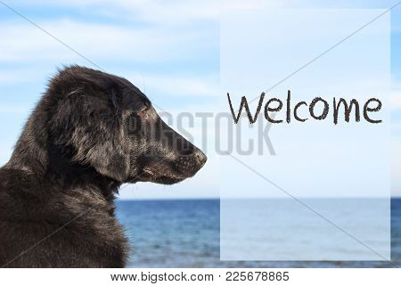 English Text Welcome. Flat Coated Retriever Dog Infront Of Ocean. Water In The Background