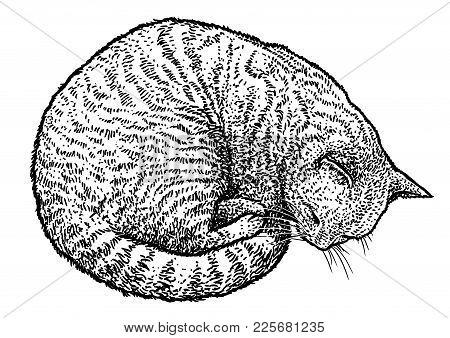Sleeping Cat Illustration, Drawing, Engraving, Ink, Line Art