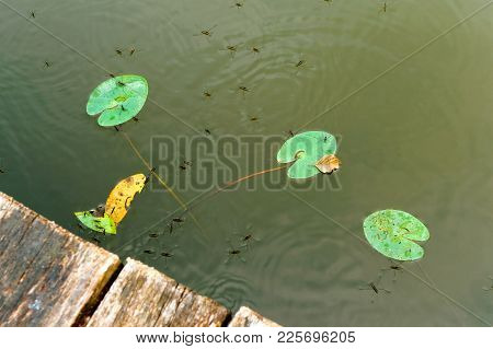 Water Meter Bed Bug, A Picturesque Pond In The Forest, Marshland, Reflection Of Trees In The Pond