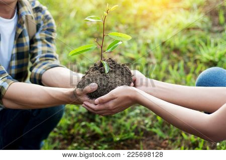 Couple Planting And Watering A Tree Together On A Summer Day In Park, Volunteering, Charity People A