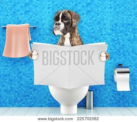 Boxer Dog Sitting On A Toilet Seat With Digestion Problems Or Constipation Reading Gossip Magazine O