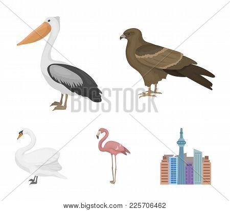 Kite, Pelican, Flamingo, Swan. Birds Set Collection Icons In Cartoon Style Vector Symbol Stock Illus
