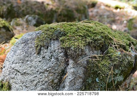 Mossy Stone In A Summer With Blurred Background