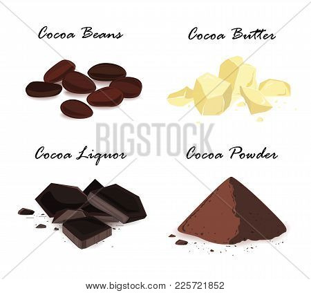 Super Food Cocoa Beans And Their Products. Cocoa Beans, Cocoa Butter, Cocoa Liquor And Powder. Vecto