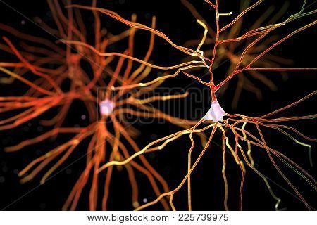 Computer Reconstruction Of Neurons, Human Brain Cells Isolated On Black Background, 3d Illustration.
