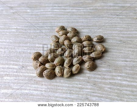 Hemp Seeds Are Ripe Fragrant Large Choice Of Sort A Bunch On A Gray Background Close Up Blurred Back