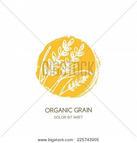 Vector Logo, Label With Linear Hand Drawn Rice, Wheat Ears, Rye Grains. Concept For Cereal Products,
