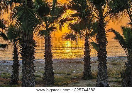 Palms On Tropical Beach In Sunset Light