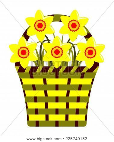 Vector Daffodils In Basket Isolated On White Background