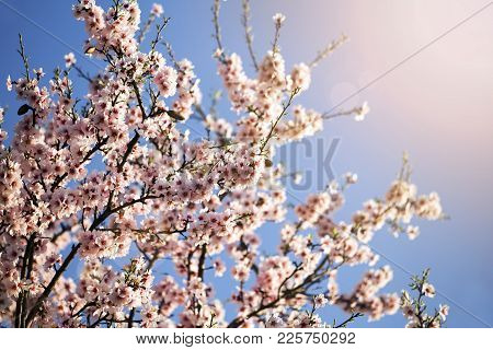 Spring Forward, Springtime Concept - Pink Flowers On A Tree Branch