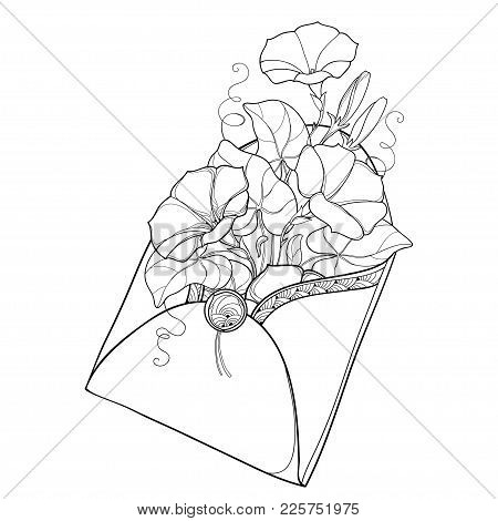 Vector Bouquet With Outline Ipomoea Or Morning Glory Flower And Leaf In Open Craft Envelope In Black
