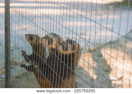 A Gang Of Marmots Look Out Of The Cage At The Zoo