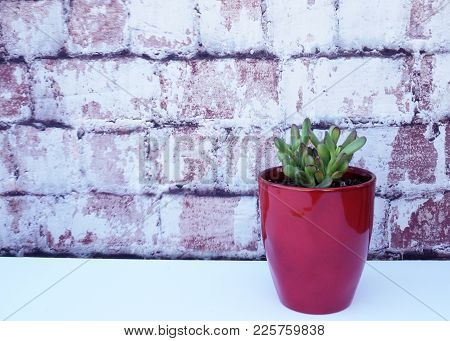 Red Tipped Succulant In A Red Vase Against Brick Background.