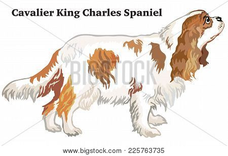 Portrait Of Standing In Profile Dog Cavalier King Charles Spaniel, Vector Colorful Illustration Isol