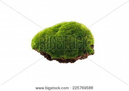 Isolated Moss. Green Moss Isolated On A  White Background