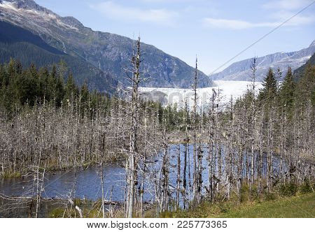 The View Of Mendenhall Glacier Park Landscape (juneau, Alaska).