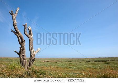 Dead Tree On A Salt Marsh
