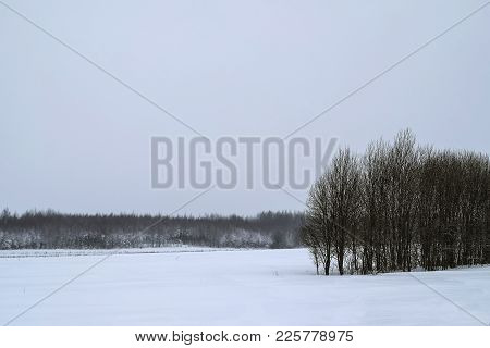 Winter Landscape With A Snowy Forest. Winter Landscape With Snowy Forest. In The Foreground Are Snow