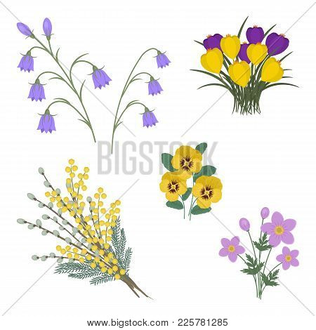 Set Of Spring Flowers On A White Background. There Are Mimosa, Willow Branches, Bellflowers, Crocuse