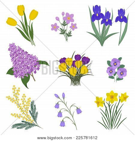 Collection Of Yellow And Purple Flowers On A White Background. There Are Mimosa, Tulips, Bells, Pans