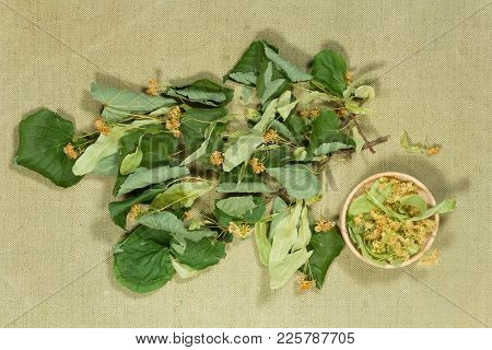 Linden. Dry Plants For Use In Alternative Medicine, Phytotherapy, Spa, Herbal Cosmetics. Preparing I
